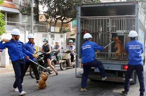 Bắt nhiều chó thả rông giữa trung tâm Sài Gòn - Ảnh 1