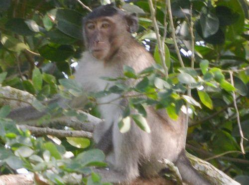 Tin tức thời sự 24h mới nhất ngày 3/3/2019: Bắn hạ khỉ cắn rách bắp chân trẻ 6 tuổi ở Sóc Trăng - Ảnh 1