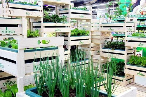 VinEco: Công nghệ trồng rau siêu sạch - Ảnh 1