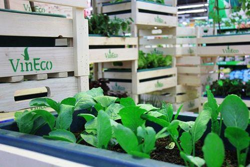 VinEco: Công nghệ trồng rau siêu sạch