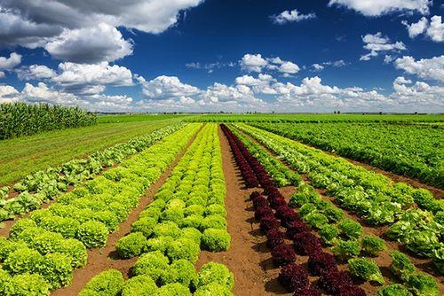 VinEco: Công nghệ trồng rau siêu sạch - Ảnh 4