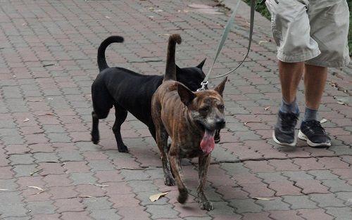 Chó vẫn thả rông, không rọ mõm khắp công viên, đường phố Hà Nội  - Ảnh 4