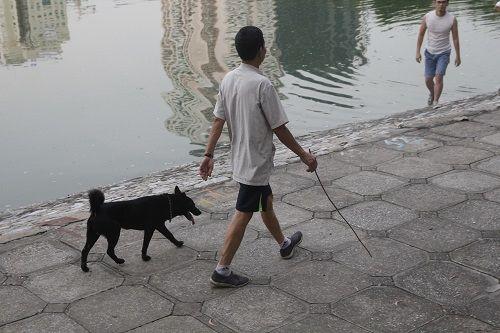 Chó vẫn thả rông, không rọ mõm khắp công viên, đường phố Hà Nội  - Ảnh 13