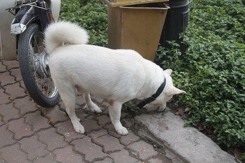 Chó vẫn thả rông, không rọ mõm khắp công viên, đường phố Hà Nội  - Ảnh 3