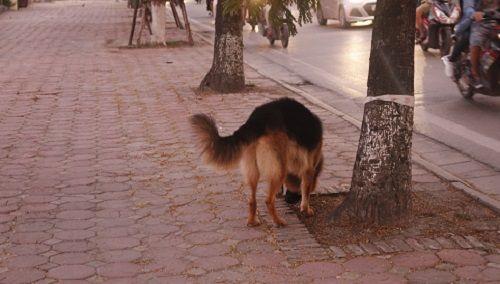 Chó vẫn thả rông, không rọ mõm khắp công viên, đường phố Hà Nội  - Ảnh 8