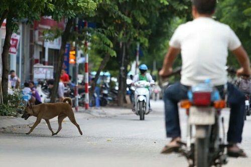Chó vẫn thả rông, không rọ mõm khắp công viên, đường phố Hà Nội  - Ảnh 9