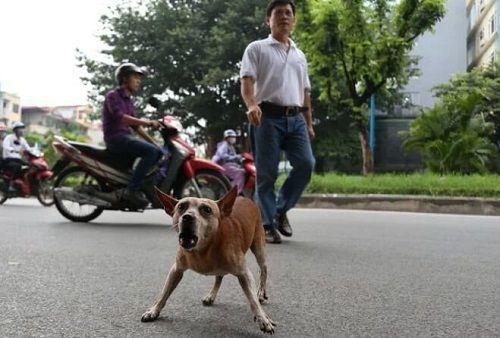 Chó vẫn thả rông, không rọ mõm khắp công viên, đường phố Hà Nội  - Ảnh 12
