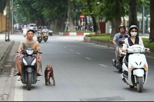 Chó vẫn thả rông, không rọ mõm khắp công viên, đường phố Hà Nội  - Ảnh 10