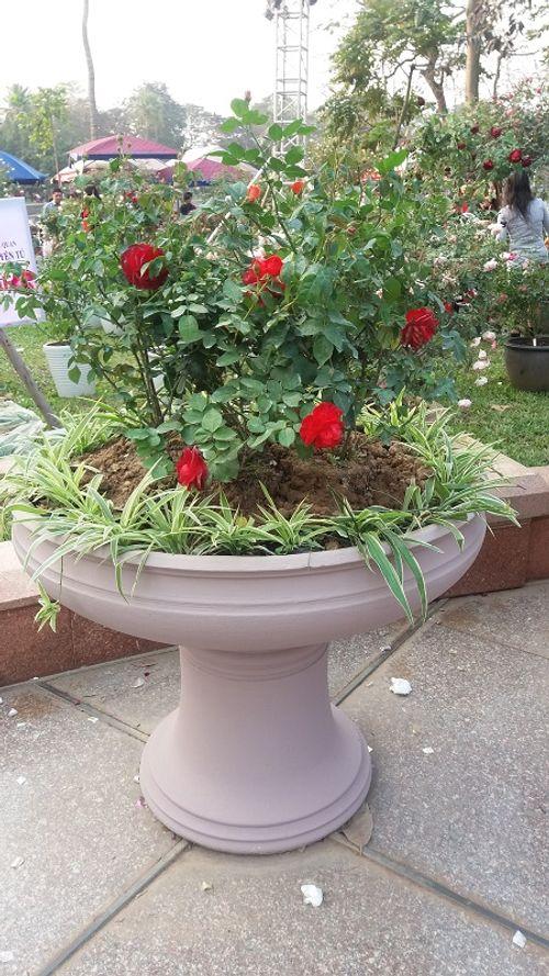 Du khách thất vọng vì lễ hội hoa hồng Bulgaria không như quảng cáo - Ảnh 7