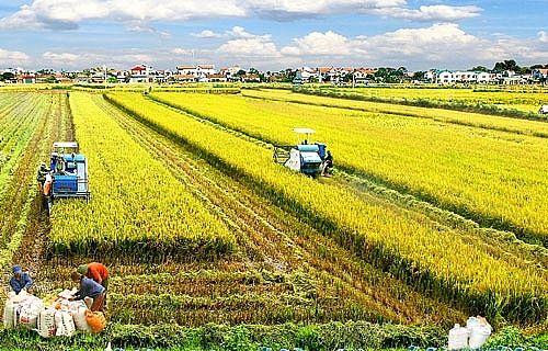 Thêm nhiều đối tượng được miễn thuế sử dụng đất nông nghiệp - Ảnh 1