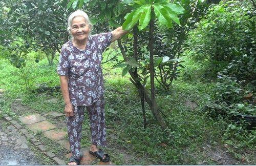 Cây hồng nhung trên 100 tuổi, độc nhất vô nhị ở Việt Nam cho quả quanh năm - Ảnh 1