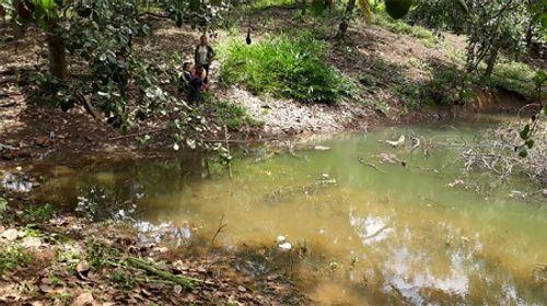 Xuống ao bắt nòng nọc, 3 học sinh tiểu học bị đuối nước - Ảnh 1