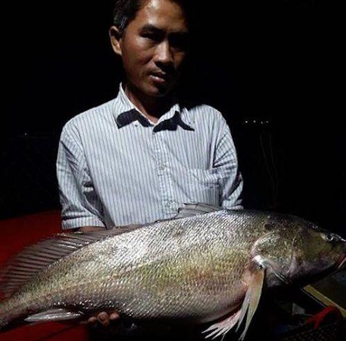 Ngư dân bắt được cá nghi sủ vàng 8 kg giá tiền tỷ trên sông Tiền - Ảnh 1
