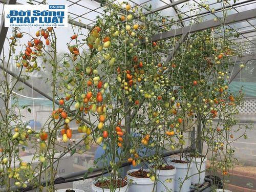Vườn rau hữu cơ cho thu nhập 350 triệu/tháng của đạo diễn trẻ - Ảnh 8