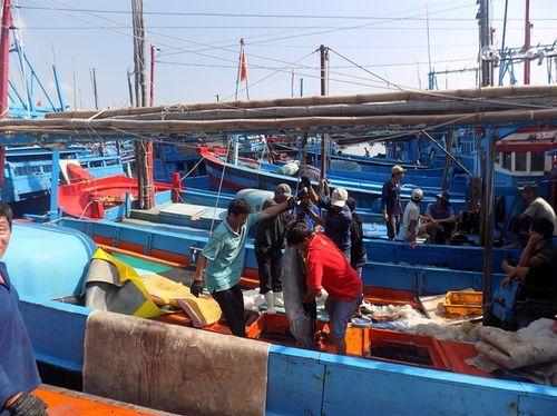 Ngư dân khánh Hòa bội thu cá ngừ đại dương. Ảnh: Báo Nông nghiệp
