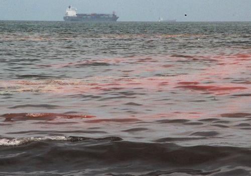 """""""Vệt nước đỏ"""" lại xuất hiện ở vùng biển Đà Nẵng - Ảnh 1"""