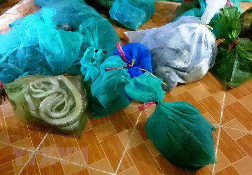 Bình Phước: Bắt giữ vụ vận chuyển động vật hoang dã với số lượng lớn - Ảnh 1