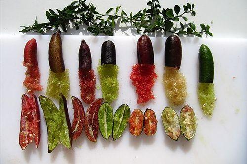 Mục sở thị loại chanh hình ngón tay, tép tròn như trứng cá có giá 3,5 triệu đồng/kg - Ảnh 2