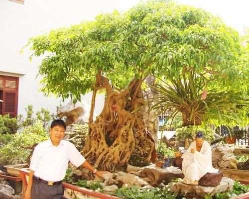 Những cây cảnh triệu đô của đại gia Việt - Ảnh 2
