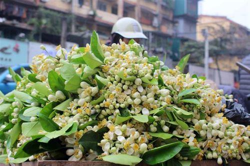 Hoa bưởi đầu mùa 200.000 đồng/kg hút khách Hà thành - Ảnh 1