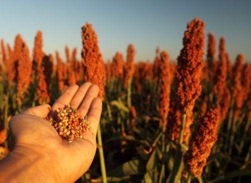 Trung Quốc mở cuộc điều tra nông sản nhập khẩu - Ảnh 1