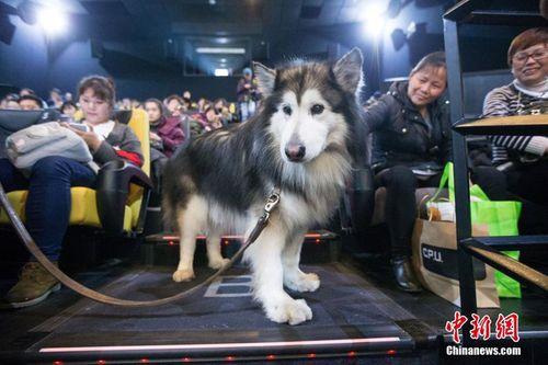 Những dịch vụ xa xỉ dành cho chó cưng của giới nhà giàu - Ảnh 3