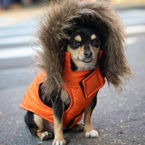 Những dịch vụ xa xỉ dành cho chó cưng của giới nhà giàu - Ảnh 1