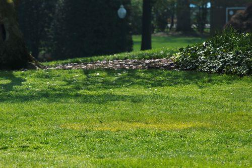 """Lý do cây sồi Tổng thống Pháp trồng tại Nhà Trắng bỗng nhiên """"mất tích"""" - Ảnh 1"""