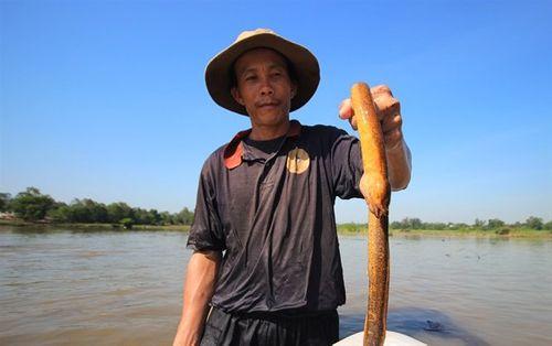 """Mục sở thị tuyệt kỹ bắt lươn của những """"cao thủ"""" ở Quảng Nam - Ảnh 2"""