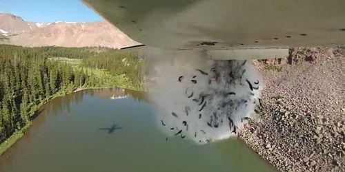 Video: Độc đáo cảnh máy bay Mỹ thả ào ạt hàng triệu con cá xuống hồ trên núi - Ảnh 1
