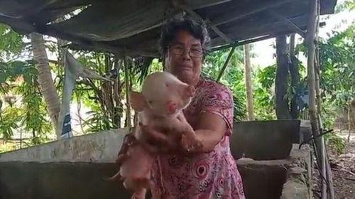 Video: Lợn chào đời có hai đầu ba mắt gây xôn xao  - Ảnh 1