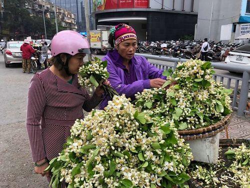"""Hoa bưởi tăng giá """"chát"""" đến hơn 100.000 đồng/lạng, dân Hà thành vẫn tìm mua - Ảnh 4"""