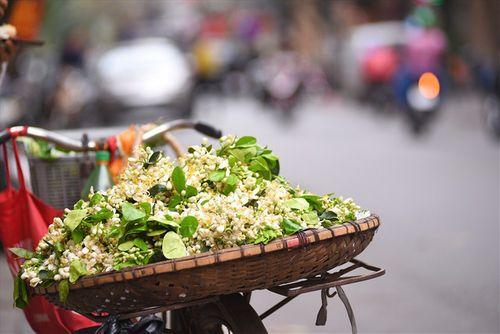 """Hoa bưởi tăng giá """"chát"""" đến hơn 100.000 đồng/lạng, dân Hà thành vẫn tìm mua - Ảnh 1"""