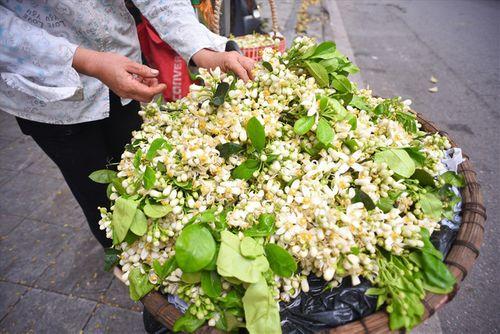 """Hoa bưởi tăng giá """"chát"""" đến hơn 100.000 đồng/lạng, dân Hà thành vẫn tìm mua - Ảnh 2"""