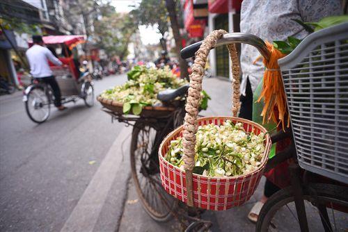 """Hoa bưởi tăng giá """"chát"""" đến hơn 100.000 đồng/lạng, dân Hà thành vẫn tìm mua - Ảnh 3"""
