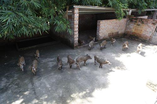 Chiêm ngưỡng trang trại sinh thái Đông Dư - Ảnh 4