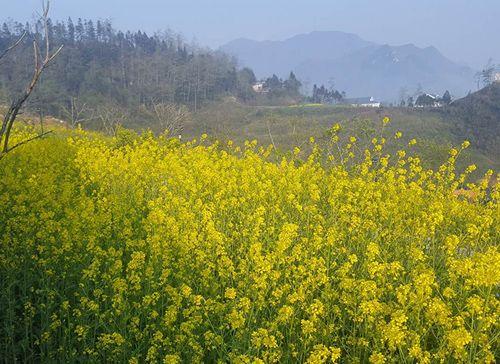 Tháng 3 - Fansipan không chỉ rực vàng hoa cải - Ảnh 1