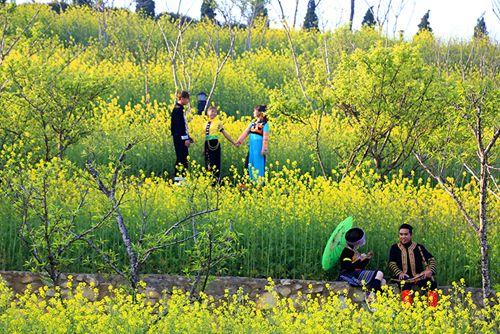 Tháng 3 - Fansipan không chỉ rực vàng hoa cải - Ảnh 2