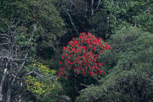 Tháng 3 - Fansipan không chỉ rực vàng hoa cải - Ảnh 9