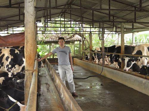 Vắt sữa bò ra... ô tô - Ảnh 1