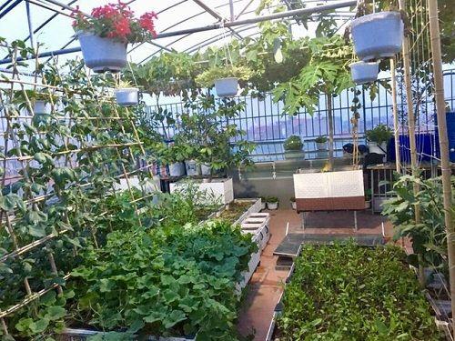 Chi 70 triệu đồng, ông bố Hà Nội cải tạo sân thượng để nuôi gà, trồng rau - Ảnh 1
