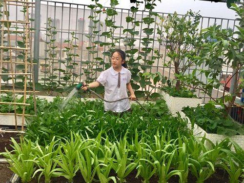 Chi 70 triệu đồng, ông bố Hà Nội cải tạo sân thượng để nuôi gà, trồng rau - Ảnh 2