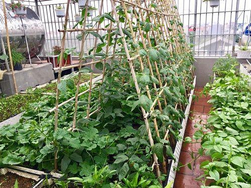 Chi 70 triệu đồng, ông bố Hà Nội cải tạo sân thượng để nuôi gà, trồng rau - Ảnh 3