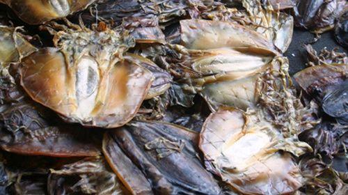 Thêm một món ngon mà người Việt vô tư ăn hằng ngày gây mù lòa, thậm chí tử vong - Ảnh 2
