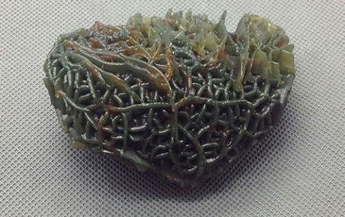 Bí mật phía sau cục đá có hình dáng kì dị như một ổ sinh vật thân mềm - Ảnh 10