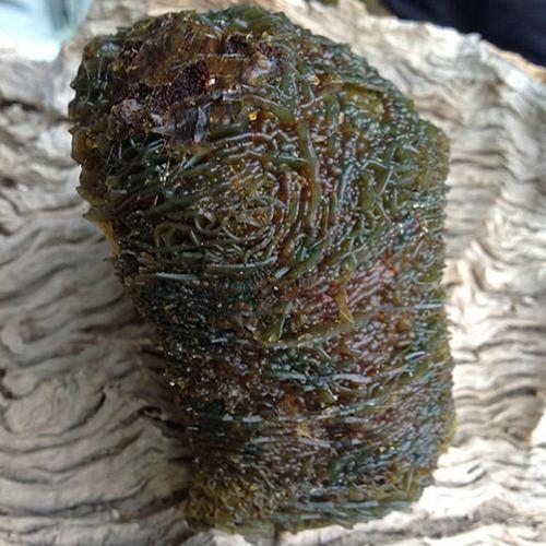 Bí mật phía sau cục đá có hình dáng kì dị như một ổ sinh vật thân mềm - Ảnh 6