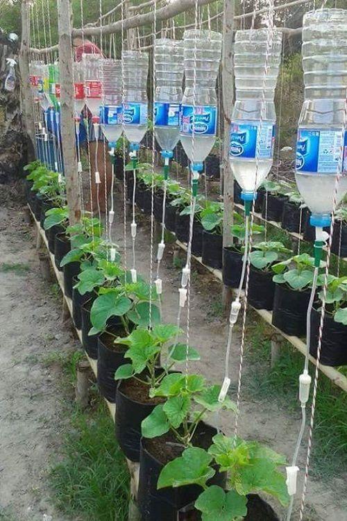 Bỏ túi ngay 7 cách tái sử dụng chai nhựa trong làm vườn - Ảnh 11