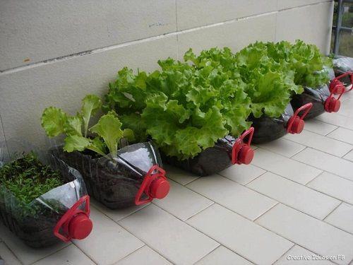 Bỏ túi ngay 7 cách tái sử dụng chai nhựa trong làm vườn - Ảnh 12