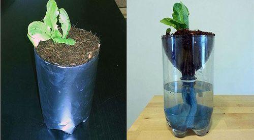 Bỏ túi ngay 7 cách tái sử dụng chai nhựa trong làm vườn - Ảnh 4