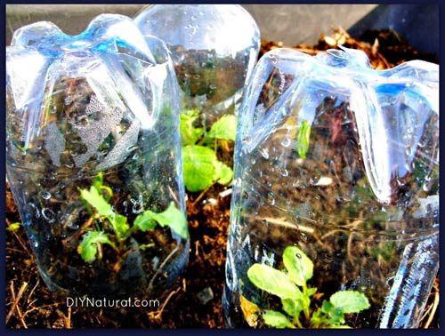 Bỏ túi ngay 7 cách tái sử dụng chai nhựa trong làm vườn - Ảnh 5